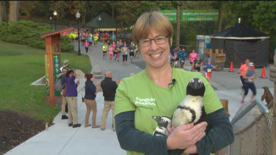 Margaret Innes from the Maryland Zoo in Baltimore holds a special friend as runners make their way through the zoo.