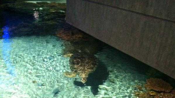 Calypso at the National Aquarium