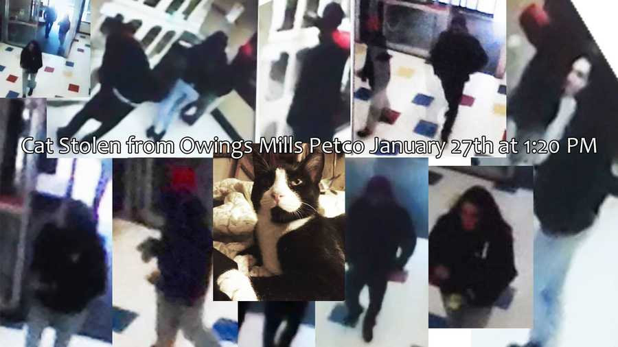 The Feline Rescue Association believes these people are responsible for taking Ying Yang from the Owings Mills Petco.