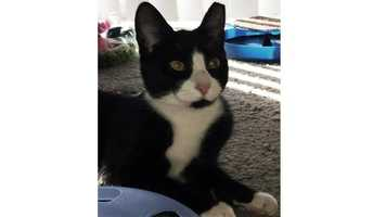 Ying Yang was stolen from the Petco in Owings Mills on Tuesday afternoon. He was returned late Wednesday.