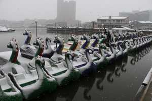 Dragon boats in the snow