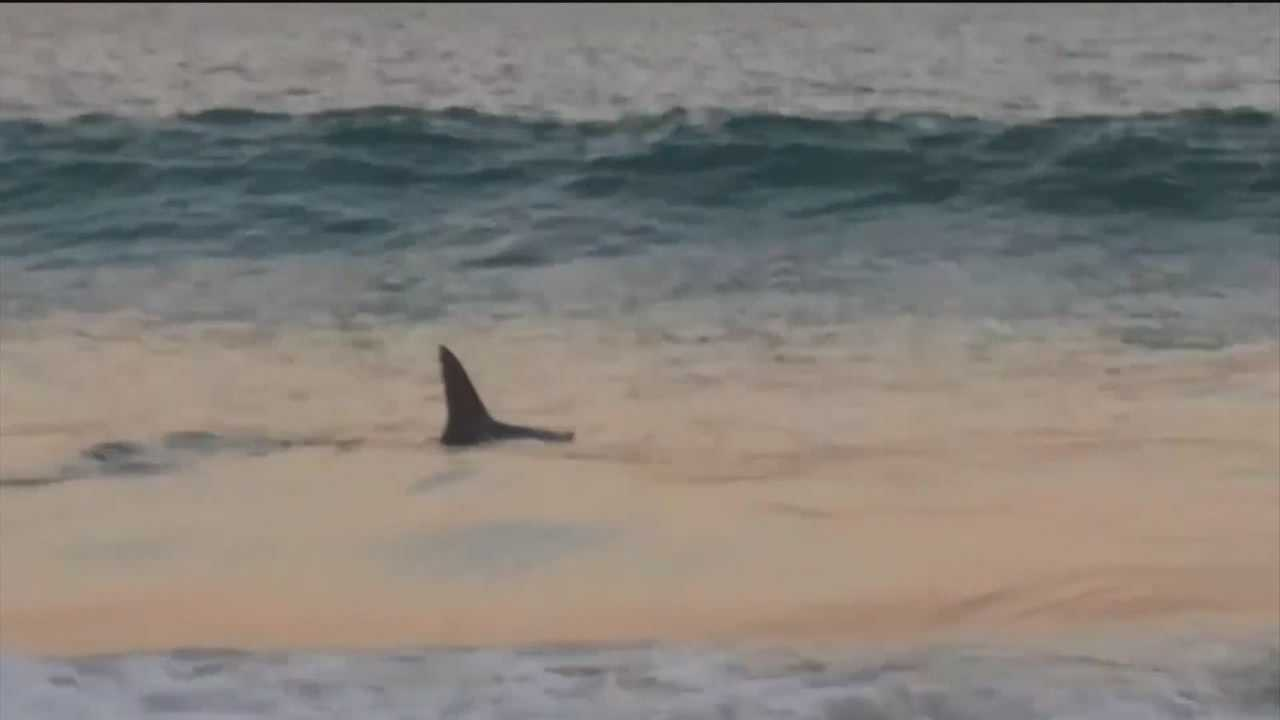 Ocean City beach-goers express their surprise over seeing a shark so close to the shore.