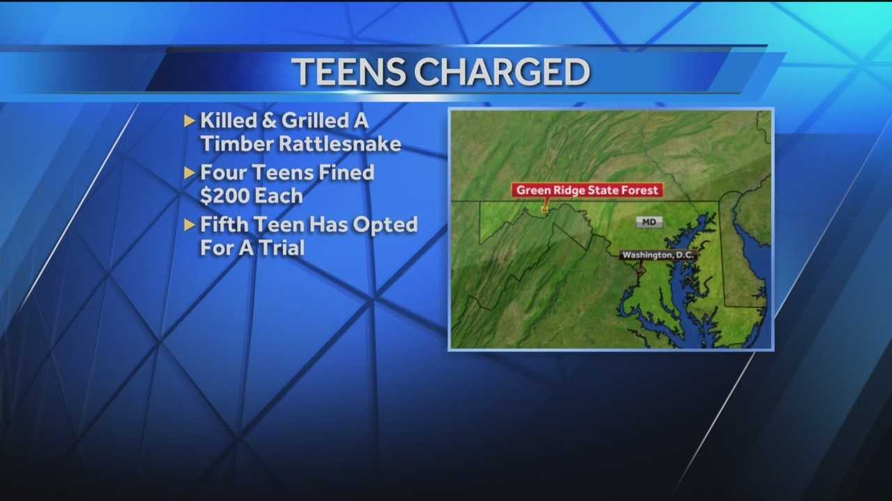 Four teens ended up paying a pretty high price for a meal they likely thought was free. They were cited for killing a timber rattlesnake and grilling it.