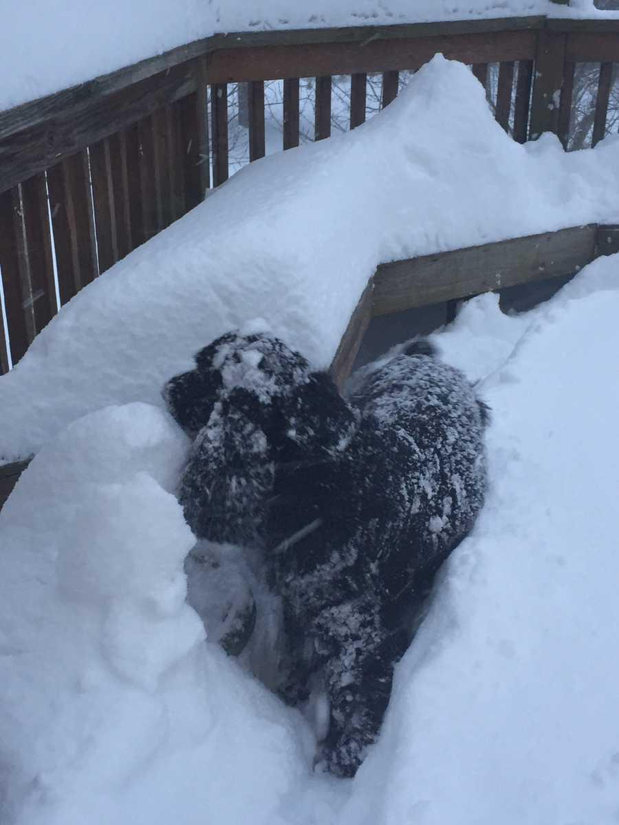 11 Insta-Weather PLUS Chief Meteorologist Tom Tasselmyer's dog, Roger