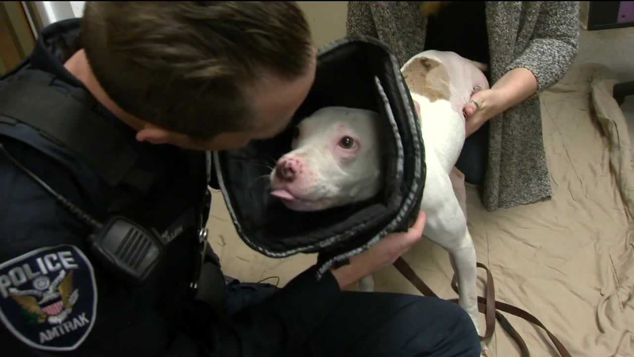 People are captivated by a local story of a severely injured dog recovering at a south Baltimore animal shelter. BARCS put a story online about the dog rescued from the train tracks by an Amtrak police officer. More than 2 million people have read the story.