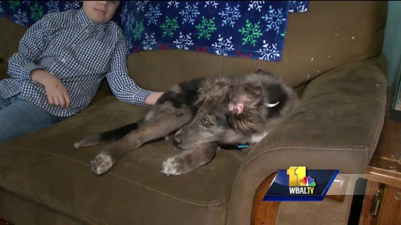 An animal rescue center will be able to help more dogs and cats based on the weight of old shoes. That's the idea behind a current campaign that will help the center pay for everything from medications to vet bills.
