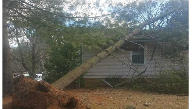 No one was injured after a tree fell on top of a home Wednesday in the 10000 block of Spotted Horse Lane in Columbia, according to the Howard County Fire Department.
