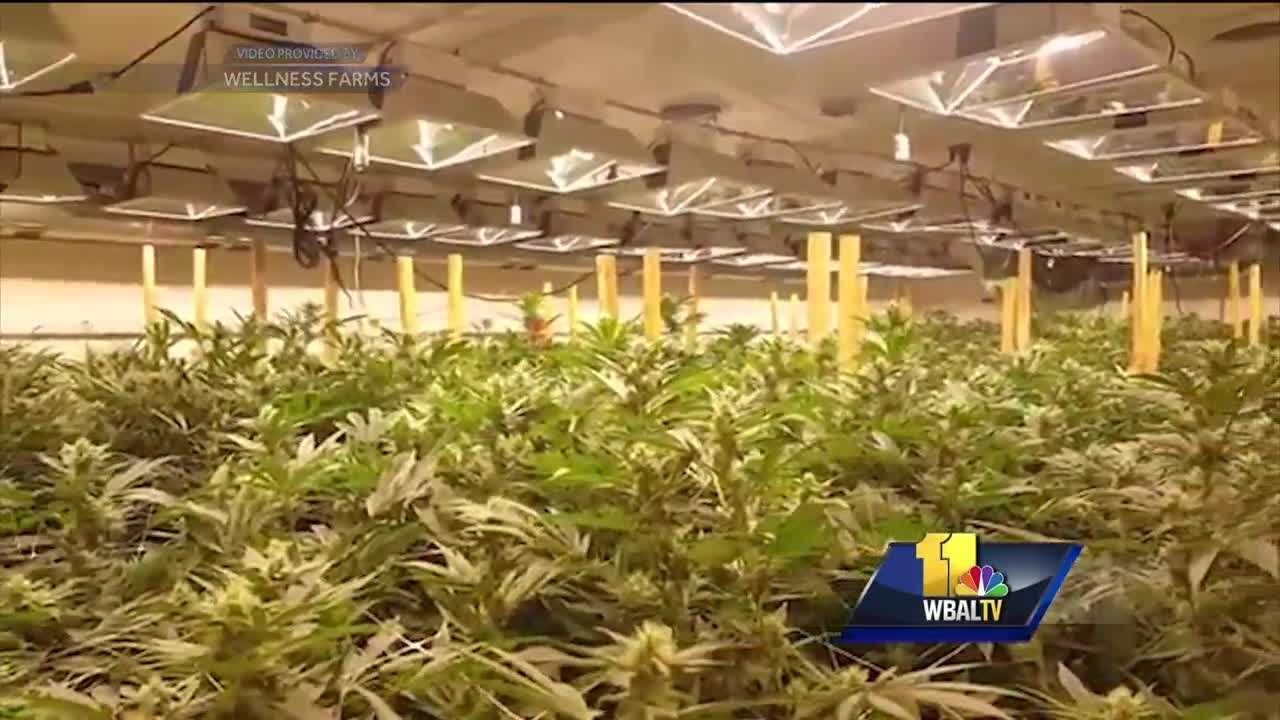 The University of Maryland-Eastern Shore is teaming up with a company that wants a license to grow medical marijuana. Some said the unique collaboration will help the school and the community, but others aren't so sure.