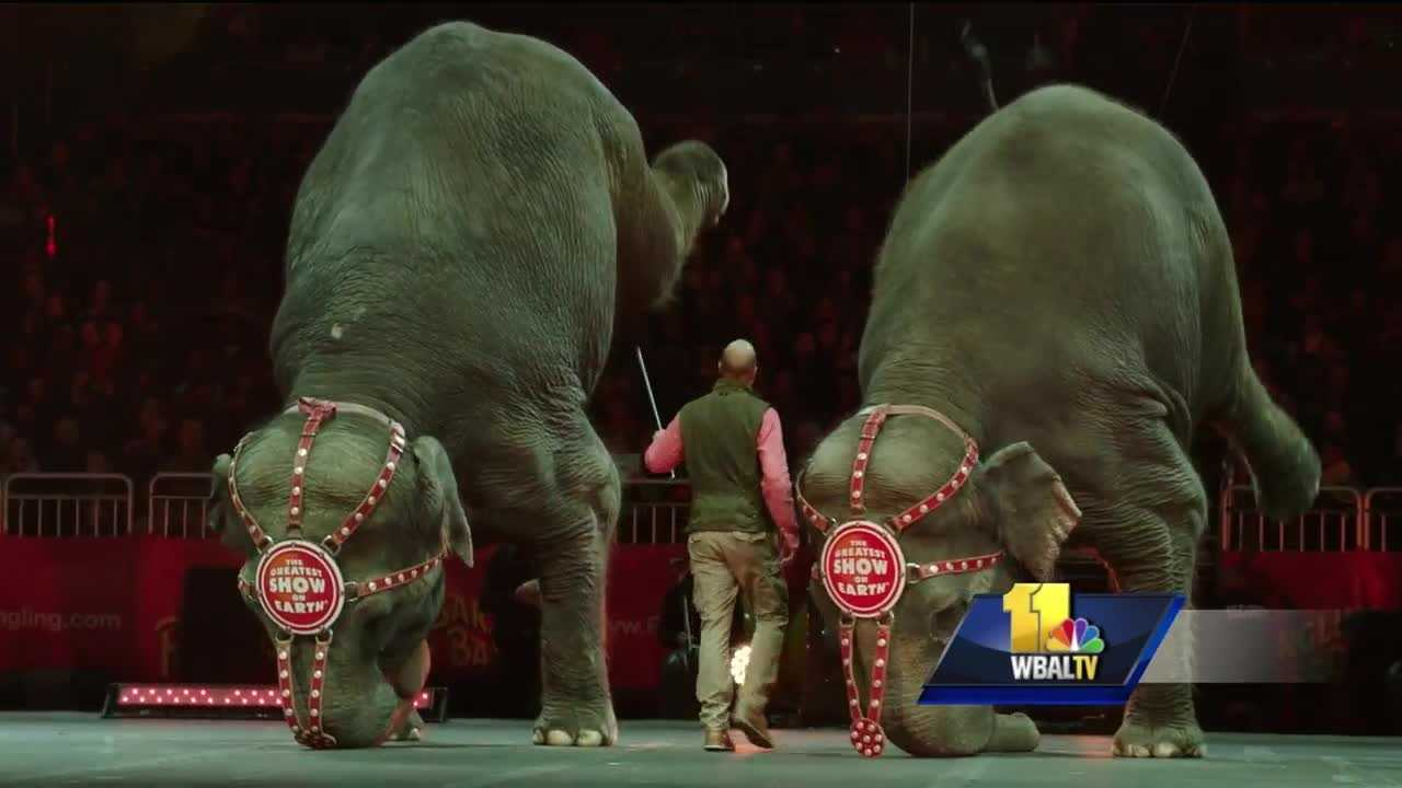 The circus is back in Baltimore and time is running out to see the elephants. Ringling Bros. and Barnum & Bailey Circus is retiring all of its touring elephants, which will end a 145-year tradition. For years, the circus has been criticized by animal rights activists and accused of cruel treatment of the elephants.