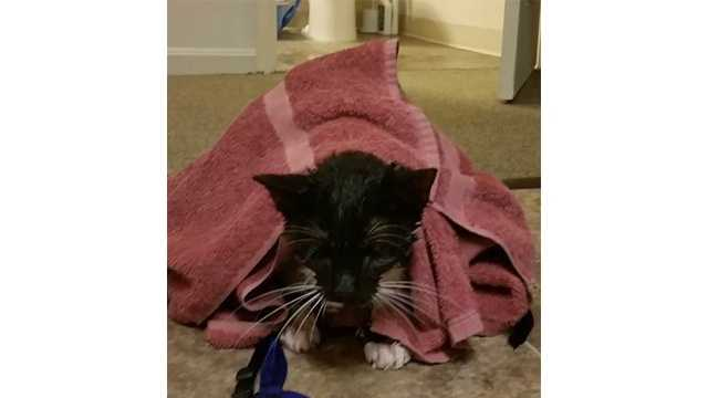 Aberden police rescued this 1-year-old cat from the home of Albert Knox, 62. Police said Knox is accused of abusing the animal.