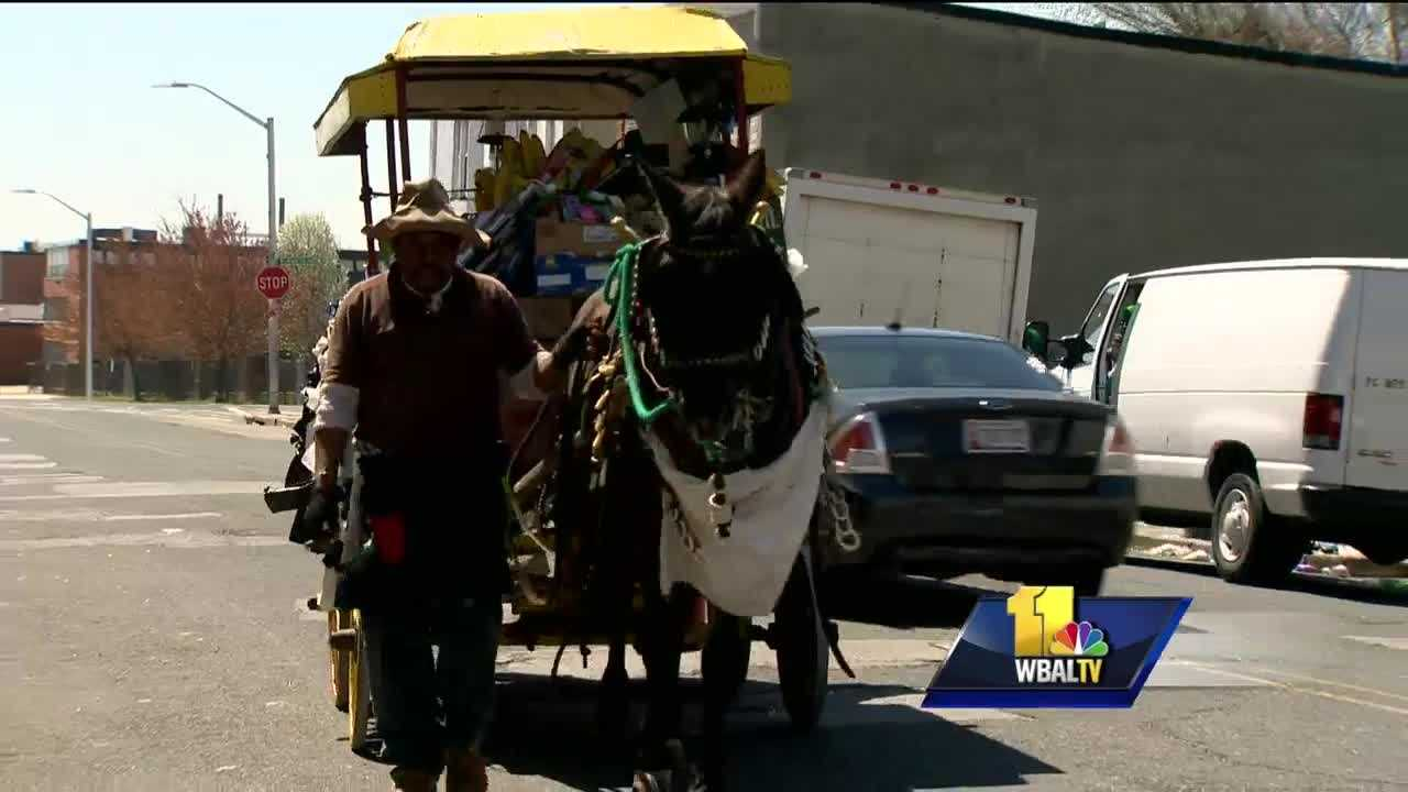 The city of Baltimore could face a lawsuit from one of six arabbers accused of animal cruelty. In January, Animal Control took custody of 14 horses at the Carlton Street stable, citing poor conditions. All the arabbers have been acquitted of the animal cruelty charges but their horses are gone. A spokeswoman for Animal Control said the acquittal means the criminal burden of proof wasn't met and the horses still could've been abused.