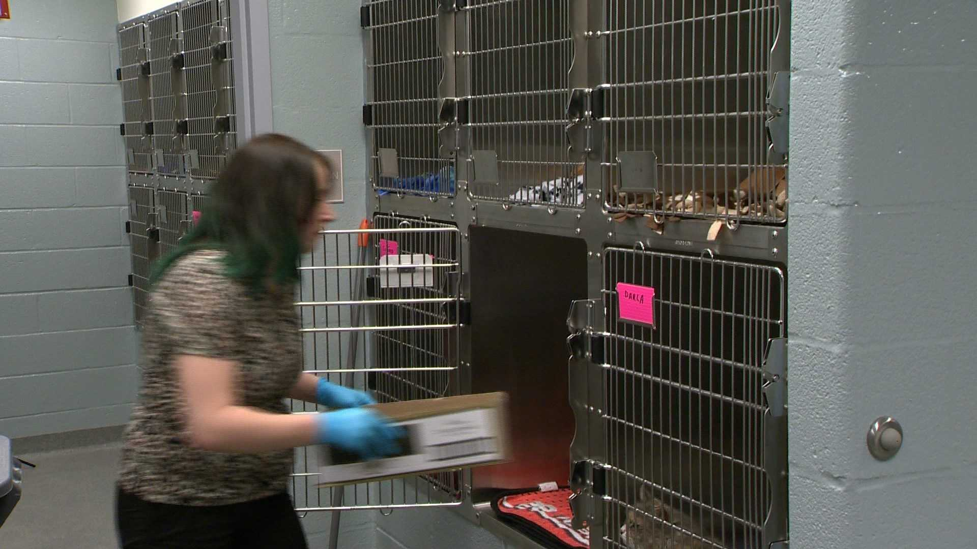 Workers prepare to move animals into a new 19,000-square-foot Humane Society of Harford County Shelter in Fallson.