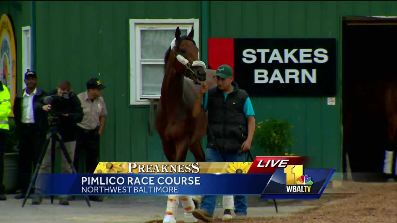 Kentucky Derby-winner Nyquist arrives at the Pimlico Race Course in Baltimore to prepare for the Preakness Stakes.