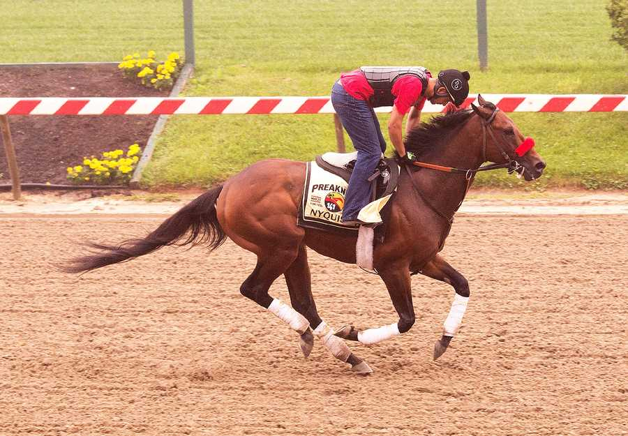 Nyquist at morning gallop
