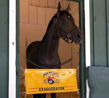 Exaggerator arrives at Pimlico Sunday