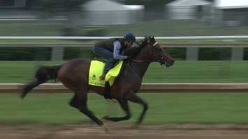 Exaggerator at the Kentucky Derby