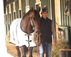 Exaggerator at Pimlico the day after the Preakness