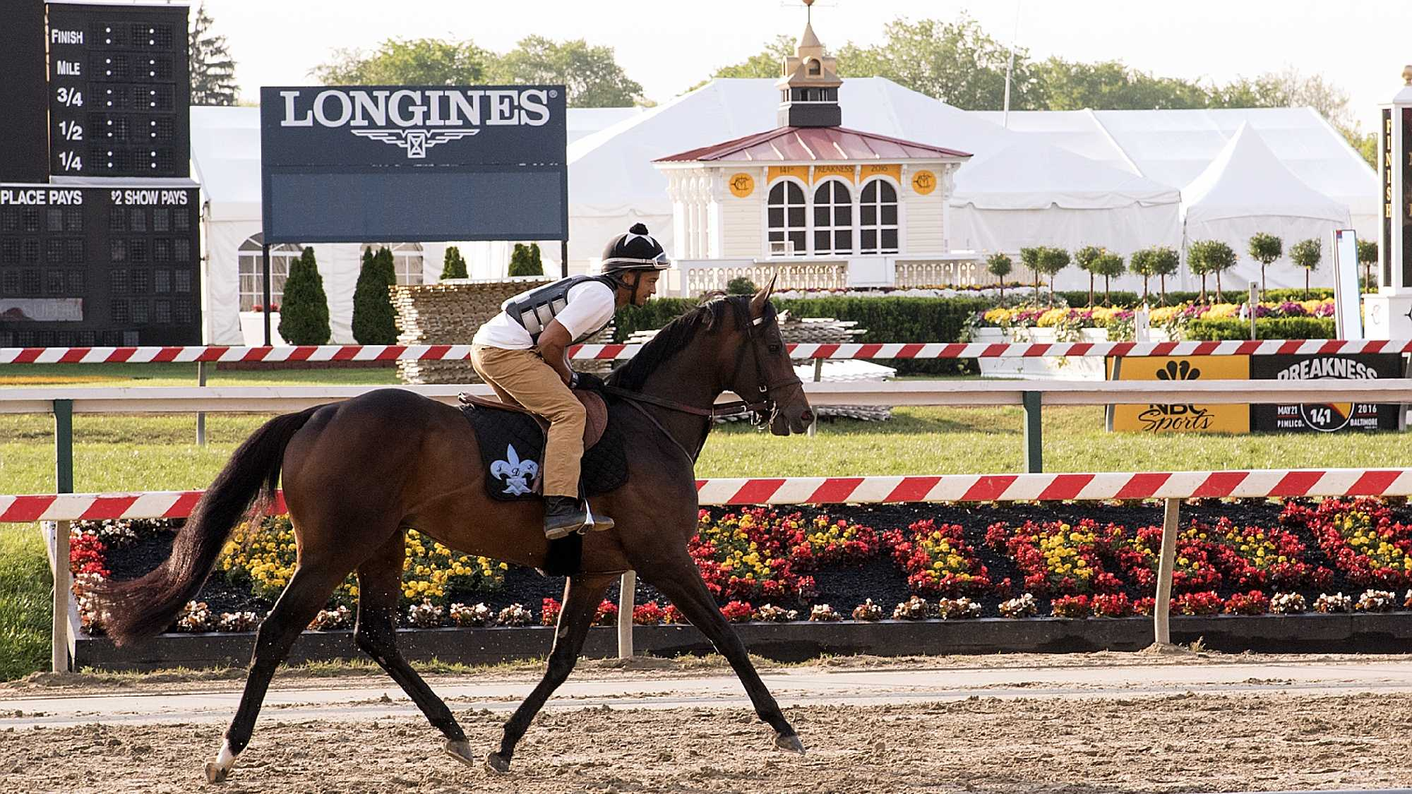 Exaggerator returns to track at Pimlico Tuesday after Preakness