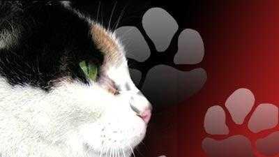 cat kitten rabies - 9334946