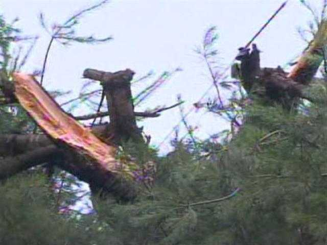 Trees were ripped apart during the storm. <b>View More Images</b>