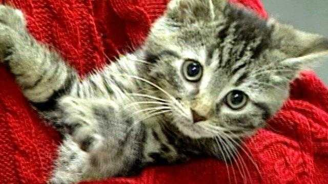 cat, kitten, animal, pet (good generic) - 18348026
