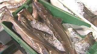 Cod Fish - 2776843