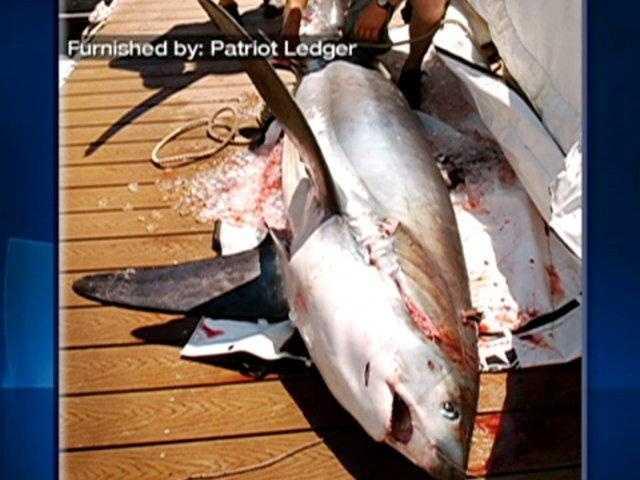 Common thresher sharks generally feed on herring, mackerel and squid.