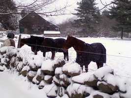 George Washington, although he was president before the White House was built, kept horses.