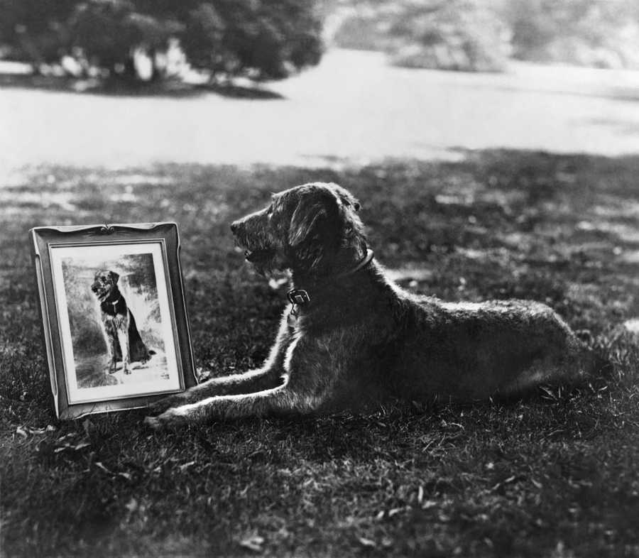 President Harding's canine companion Laddie Boy, an airdale, in 1922.