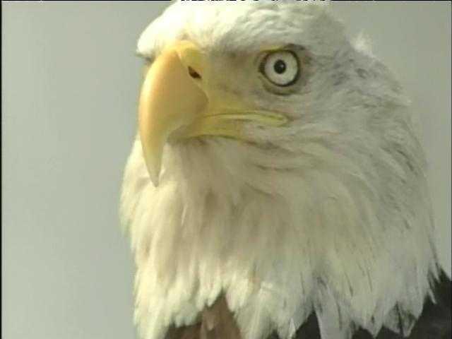 James Buchanan had bald eagles.