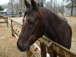 Andrew Jackson kept championship horses and ponies.