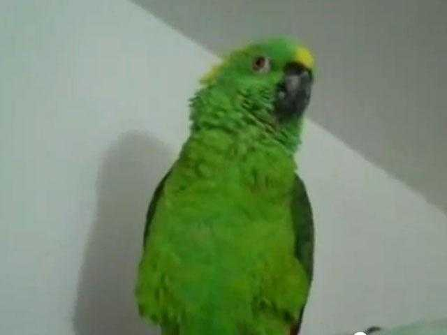 James Madison is said to have kept a green parrot.