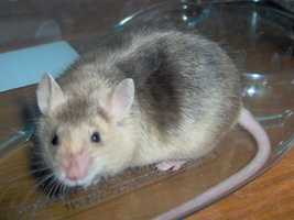 Andrew Johnson, although he had no official pets, is said to have fed the White House mice.