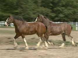 President Grant kept a variety of horses,