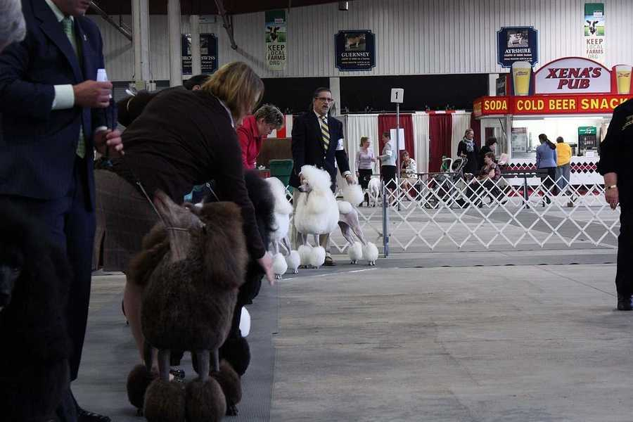 Regional dog shows are held many times each year