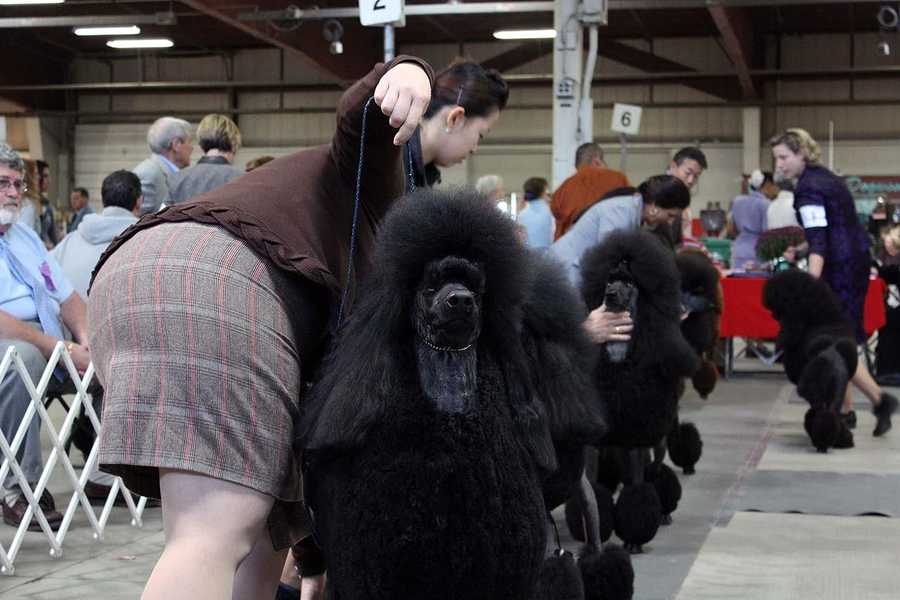 It takes literally hours to groom some dogs.