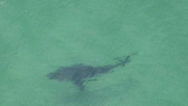 Spotter pilot George Breen saw this Great White off Nauset on July 5, 2011.