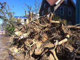 These massive trees weathered blizzards and hurricanes, but were no match for the deadly tornado.