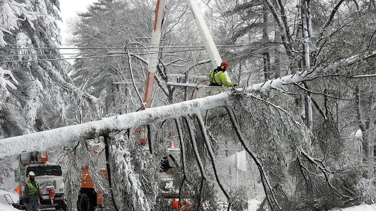 Snow Marshfield Tree 3 - 26635496