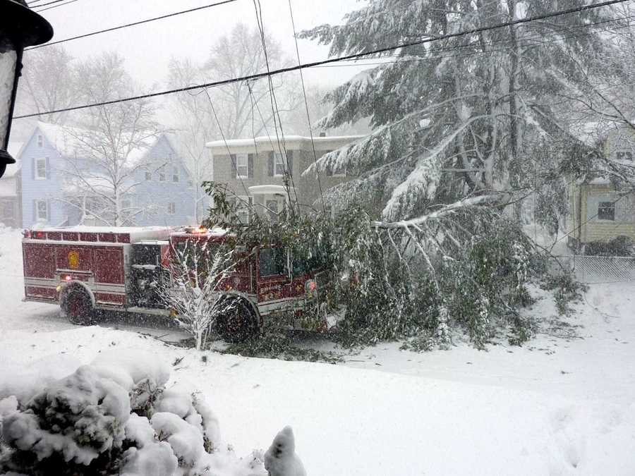 A tree fell on a fire truck on Tremont Street in Melrose, injuring a firefighter responding to a call.