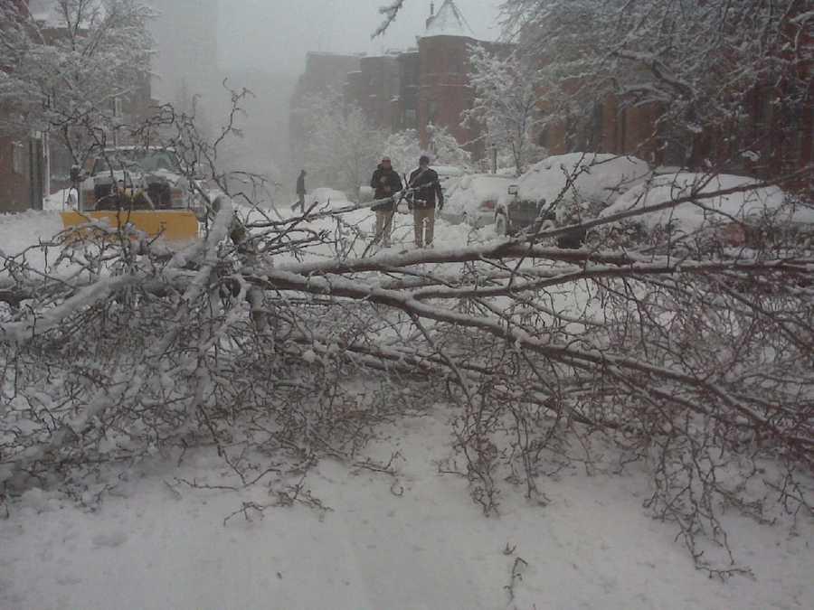 Trees down on St. Botolph Street in Boston