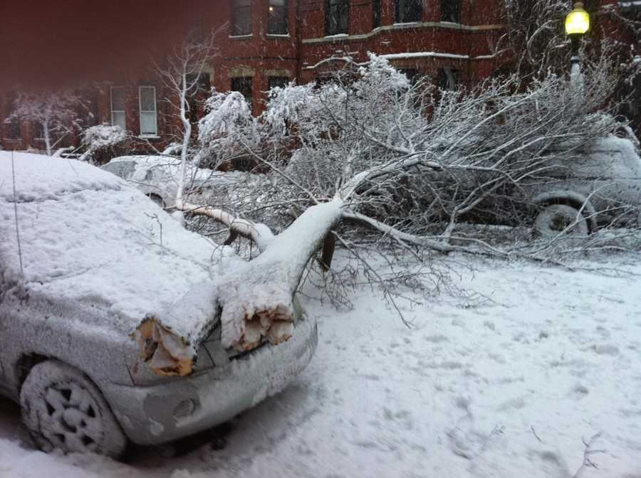 A tree came down on parked cars in Boston's South End neighborhood.