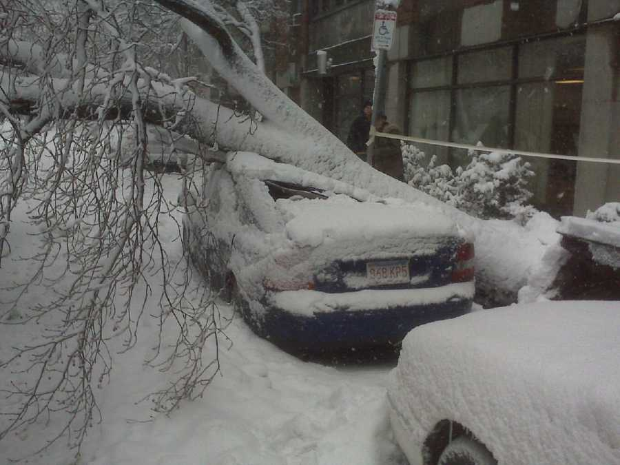 A tree comes down on a car on St. Botolph Street in Boston