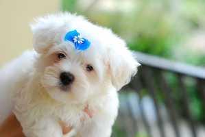 6.) Pet food