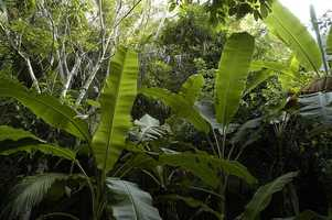 The Jungle is now part of Wellfleet