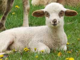 Lamb City is now part of Phllipston
