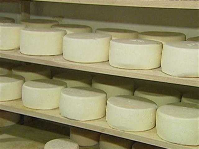 This season's Weston Wheel, a sheeps' milk cheese.