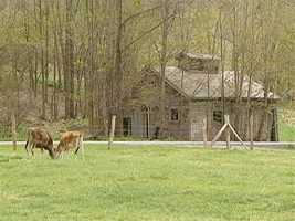 Consider Bardwell Farm, partners with three cows' milk farms and two very small goat dairies.