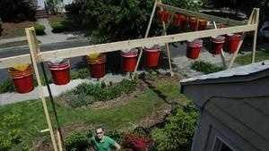 Tomato garden is innovative but intrusive