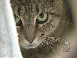 PETA has tips for keeping your pets cool and safe when the temps spike.